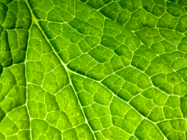 Super close up of a green leaf