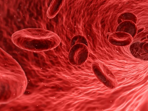 Red blood cells travelling through an artery