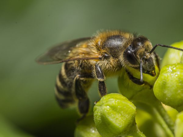 Close up of bee on green plant